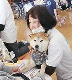 犬・猫とボランティア