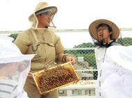 弘明寺でハチミツ作り