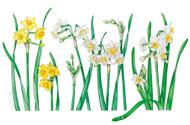 植物画の作品展