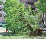 暴風で大荒れ 被害多数