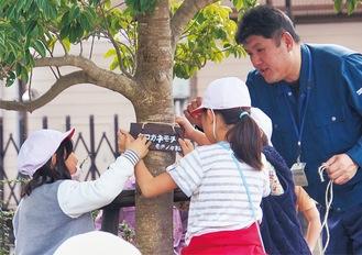 樹名板を取り付ける児童