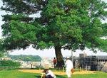 緑が多い清水ケ丘公園
