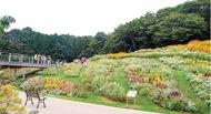25万本の大花壇