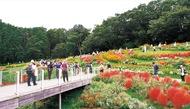 秋の彩り 大花壇