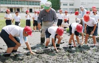 田植えに挑戦する児童たち(過去)