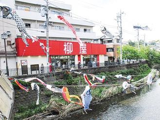 春風にそよぐ鯉のぼり(さくら橋付近で4月22日撮影)