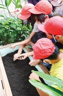 キエーロに入っている土の感触を確かめる児童