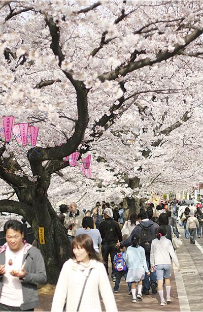 2年ぶりの桜まつり