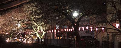 闇夜に浮かぶ桜色の光