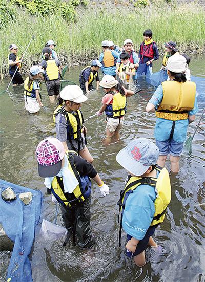 大岡川の魚を知る
