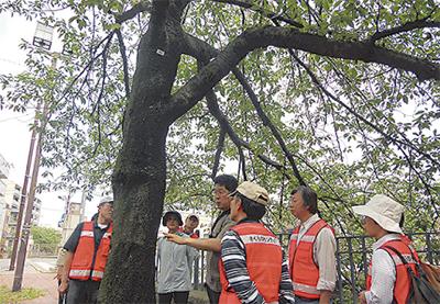 南の桜、守る人々