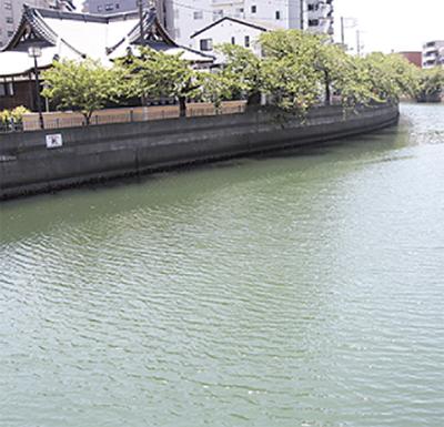 大岡川の魚とギンナン