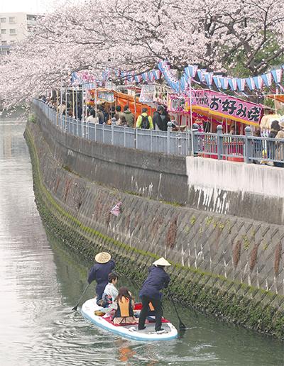 咲き誇る500本の桜