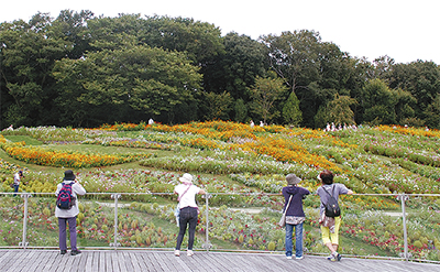 秋の大花壇を再公開