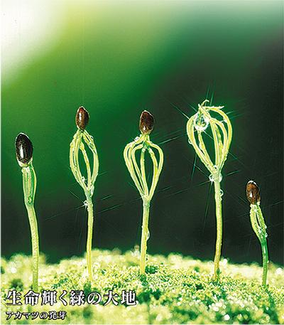緑空間の創造と確かな腕