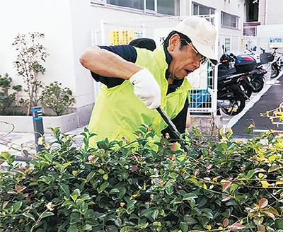 植え込みを刈る社員