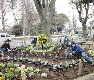 近隣住民などの協力により区内に新たな花の観賞スポットが誕生した