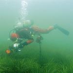 アマモ場の潜水作業の様子