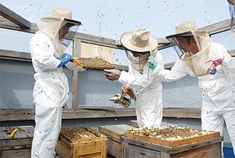 ハチミツが詰まった板を取り出す