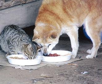 被災地の犬や猫の姿を展示する