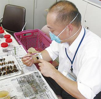 女王蜂を1匹捕獲できれば実質約3万円の負担軽減に