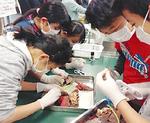 豚の肺を観察する6年生の児童