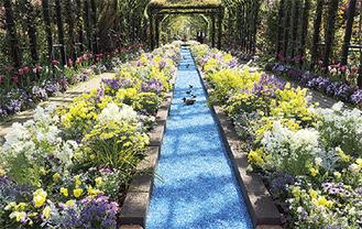約50mの花壇「ヒーリングカーペット」