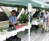 地場野菜並ぶ朝市