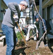 庭の手入れボラ本格稼働