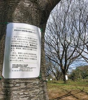 保土ケ谷公園では宴会自粛を呼びかけるチラシが桜の木に掲出された