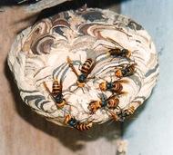 ハチ被害 注意喚起