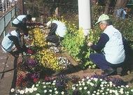 花壇ボラ募集中