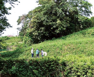 新緑に染まる森を歩く