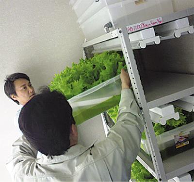 "仏向町に""野菜工場"""