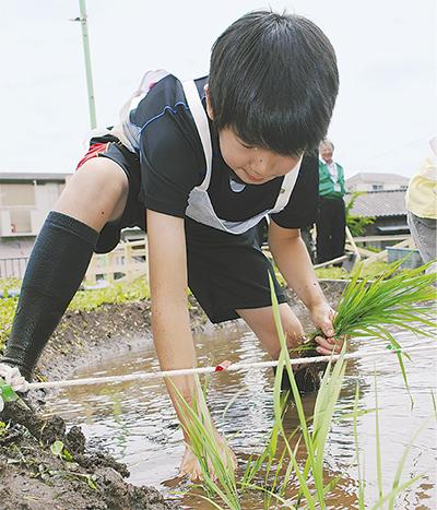 泥にまみれ田植え
