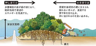 「東北に『森の防潮堤』を」
