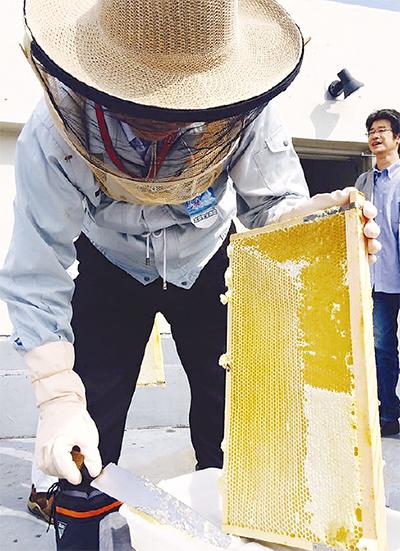 養蜂場はビル屋上