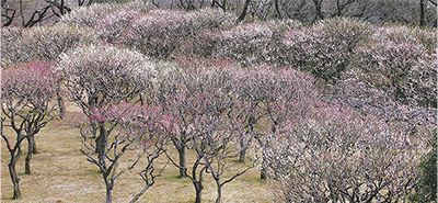 春告げる梅まつり