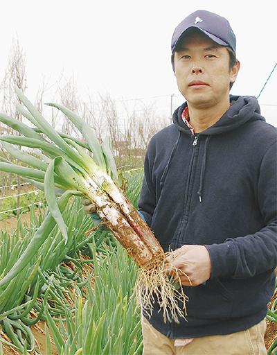 オリジナル葱を開発