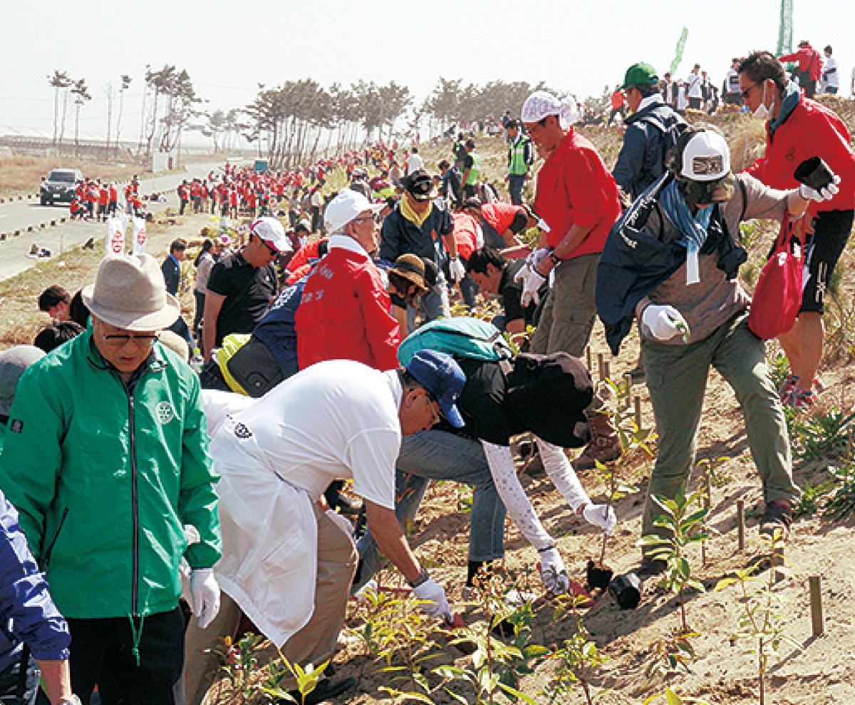 宮城県の海岸線に植樹