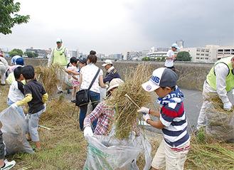 桜並木沿いの雑草などを含め、ゴミ1420kgを収集した