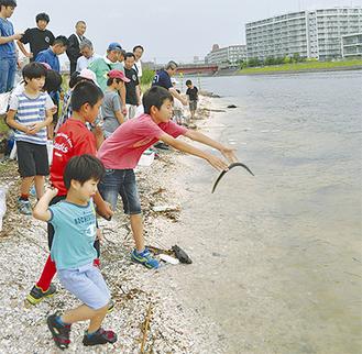ウナギやアナゴ、アサリを海へと帰す子ら。滑るウナギと苦闘しながらも楽しげに逃がしていた。