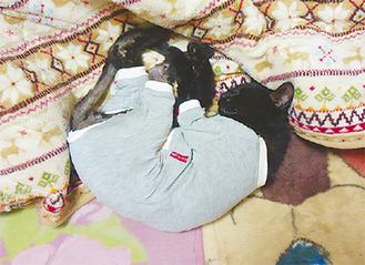 介護服を着て休む猫