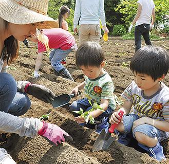 サツマイモの苗を植える親子