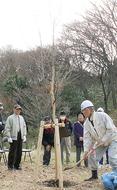三ツ池公園に記念樹