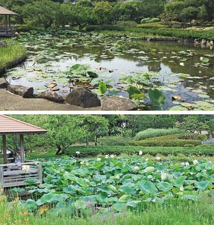 昨年の池の様子(上)と今年の様子(7月5日撮影)