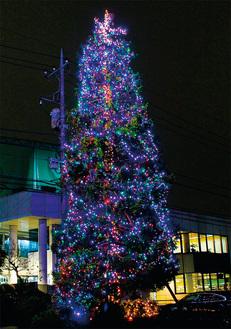 夜道を美しく彩るツリー