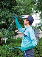 暖かさで庭の害虫も活発化