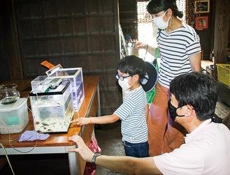 貝殻浜付近に生息する生き物を展示