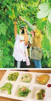 八千代田ファームでの収穫体験(上)とゴーヤ料理